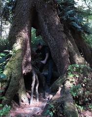 rooty business (carolyn_in_oregon) Tags: tree oregon al allie pacificocean oswaldweststatepark shortsandsbeach
