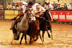 Mandando pata (Eduardo Amorim) Tags: brazil horses horse southamerica brasil criollo caballo cheval caballos mare cavalos pferde cavalli cavallo cavalo gauchos pferd riograndedosul hest mares hevonen brsil chevaux gaucho gua guas  yegua amricadosul hst yeguas gacho  amriquedusud  gachos  sudamrica suramrica amricadelsur  sdamerika esteio crioulo caballoscriollos criollos   americadelsud freiodeouro  crioulos cavalocrioulo americameridionale caballocriollo eduardoamorim cavaloscrioulos iayayam yamaiay guacrioula yeguacriolla guascrioulas yeguascriollas freiodeouro2010
