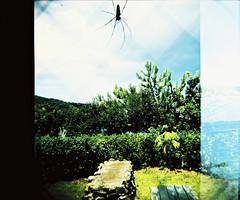 amami5 (Meril Pelin ker) Tags: japan holga amamioshima