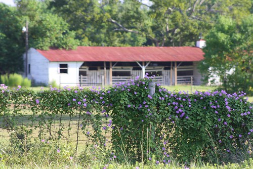 Barn and Blooms