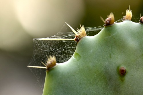cactus and web