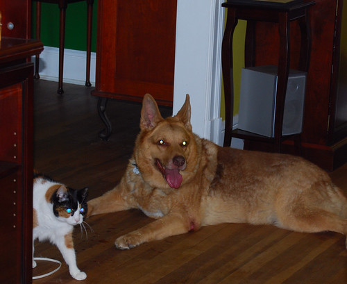 Lucy the dog and Pubm the cat