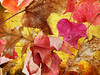 Golden Chaos (njk1951) Tags: leaves windyday autumncolor warmtones seasonalcolor goldentexture goldenchaos magicunicornverybest magicunicornmasterpiece