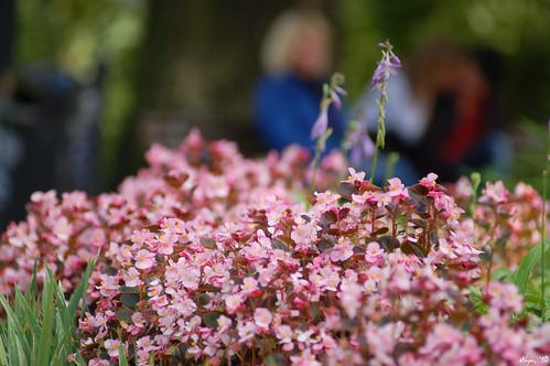Flowers in Riga
