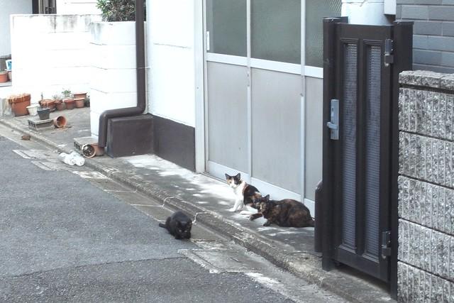 Today's Cat@2010-09-22