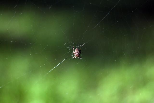 Day 22 - Itsy Bitsy Spider