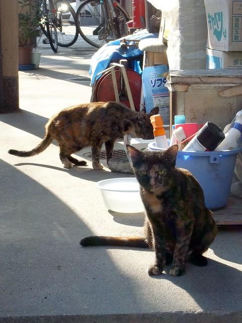 Today's Cat@2010-09-23