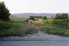 Father and Daughter, Sooss Vineyards (earth to jonathan) Tags: 50mm austria sterreich minolta wine kodak vineyards 17 portra 201 soos srt thermenregion heurigen 400vc rokkor