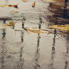 Rain fall (greenicadesign) Tags: fall rain montreal leafs bokehlicious
