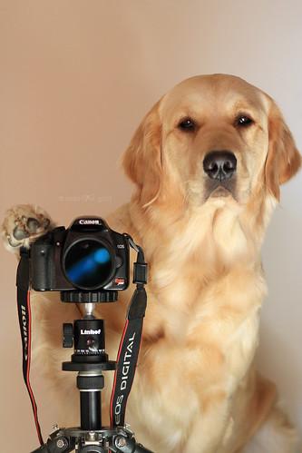 {39/52 2010} Tagged ~ Novice Photographer