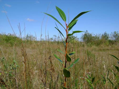 Lone Plant