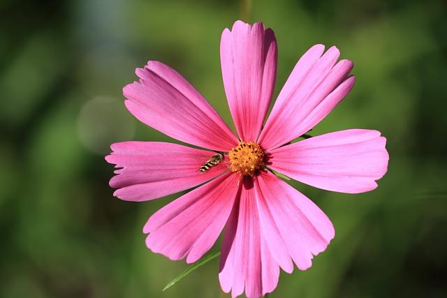 秋のお花にご挨拶