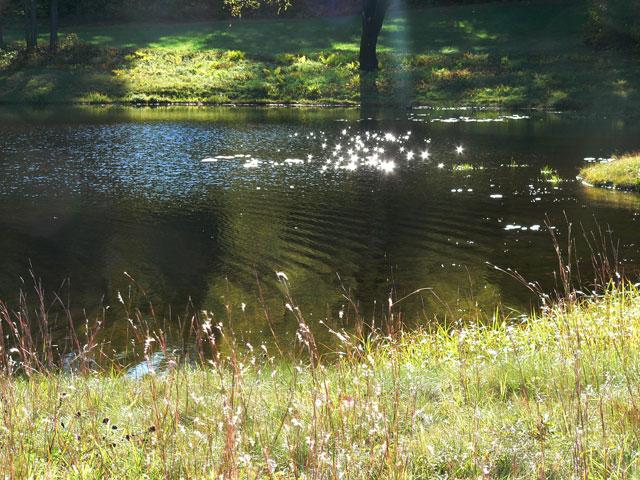 pond_oct1