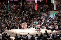 日馬富士 画像47