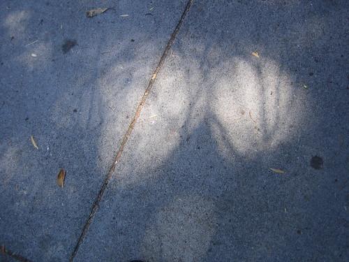 Shadow _ 8918