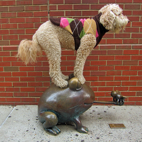 cute leap frog labradoodle