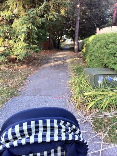 8 a.m. morning walk