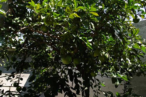 My garden 0085 October 05, 2010