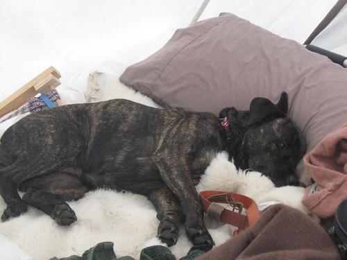 Comfy Clara