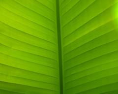 Green (J.P.G. Photography) Tags: plant green grn blatt emmen