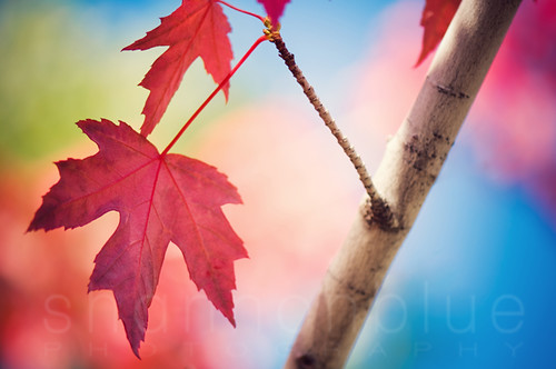 autumn brights
