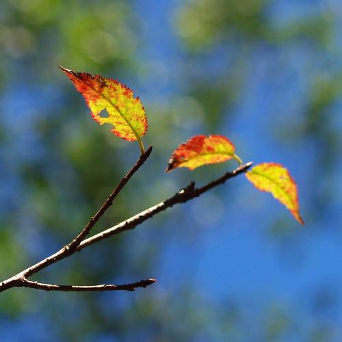藍天搭綠葉...我說得是背景啦~