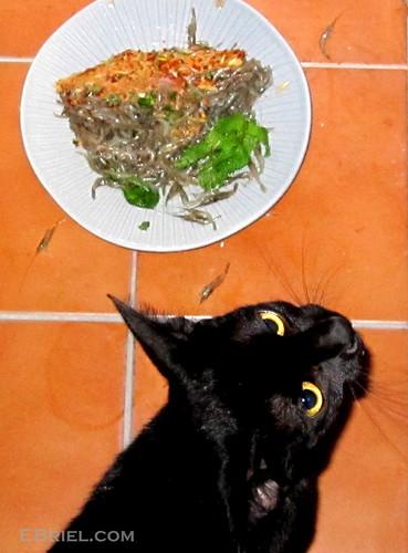 What's Not for Dinner