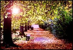 Cross Park (Mazetta) Tags: park city autumn light urban nature leaves scotland cross path glasgow benches partick