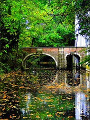 The old bridge on a dull october day. (jackfre2) Tags: park bridge autumn trees castle fall leaves reflections pond october deadleaves floating antwerp deurne oldbridge boekenbergpark mygearandmepremium