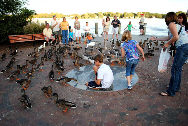 Community of ducks