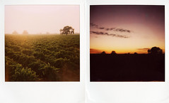 (a life in my head) Tags: california county sunset polaroid one vineyard san step joaquin lodi acampo