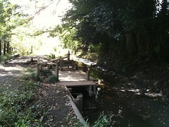 さいたま ど真ん中 河童の森 2
