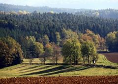 Autumnal trees (:Linda:) Tags: autumn tree germany landscape pond village herbst thuringia soil baum autumnal conifer erde nadelbaum herbstlich erdboden konifere brden erdreich ackerboden autumnallandscape landschaftimherbst herbstlichelandschaft