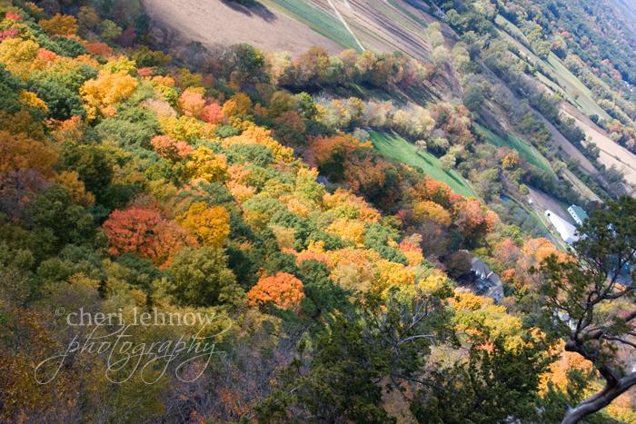 IMG_2452_leaves.jpg