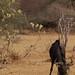 Africa_Botswana_Tsodilo_Caprivi (72 of 78)