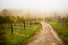 Frost Kissed Vineyards (laura_bostonthek) Tags: autumn roses dog fog vines frost vineyards grapes paths walkers sheds