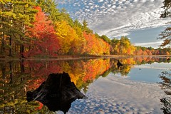 Perspective (StarrGazr) Tags: autumn sky fall water colors leaves pond colours newengland newhampshire conservation nh foliage explore stump hudson musquash highestposition3onfridayoctober222010