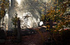 Fire at Line Creek Nature Area (mjkjr) Tags: light ga fire smoke rays firefighters crepuscularrays 2010 fayettecounty 500d peachtreecity october22 linecreek efs1755mmf28isusm linecreeknaturearea t1i mjkjr httpwwwflickrcomphotosmjkjr october222010