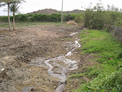 路蟹棲地被破壞  朱玉璽老師提供