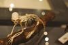 El esqueleto (IV): Un sistema equilibrado