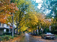 aw time (skintone) Tags: road street old autumn houses orange white ontario canada black color green heritage fall cars wet colors leaves rain yellow gold grey branches falling windsor canopy windermere ending skintone itsmulticolored