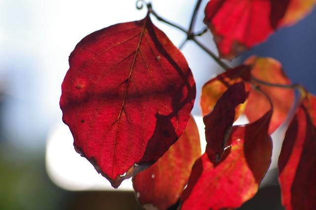 2010 Autumn