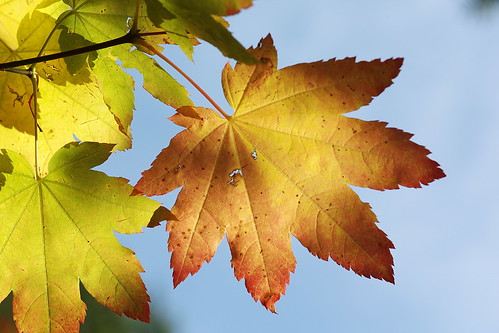 Autumn leaf: orange by The Bacher Family