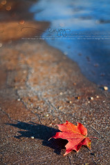 308/365: Enjoy the Season of Change (pixelmama) Tags: november fall beach relax sand shoreline lakemichigan mapleleaf 2010 project365 sunrisebeach thecolorsofautumn lakebluffillinois 3652010 enjoytheseasonofchange