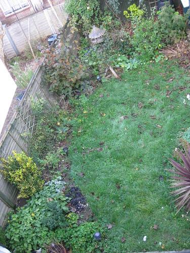 Upper lawn 1/11/2010