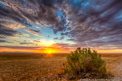 Arizona Sunset Revisited (www.alexsommersphotography.com) Tags: blue sunset summer arizona sky orange field yellow clouds canon eos bush desert tripod az brush 7d gilbert rays usm dslr efs hdr 1022 manfrotto ballhead santan photomatix cs5 f354 topazadjust wwwalexsommersphotographycom