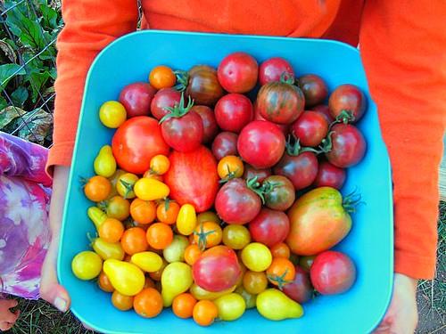 Our tomato rainbow