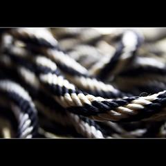 11.11.2010 (K Jurgens) Tags: macro rope