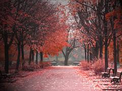 Parc Lafontaine (Fransois) Tags: parc park automne fall autumn parclafontaine montréal tchekhov art bestcapturesaoi rouge red allée aisle foliage