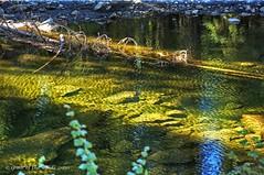 Sunshine & Shadows (jimgspokane) Tags: mountains idaho forests creeks mccall onlythebestare